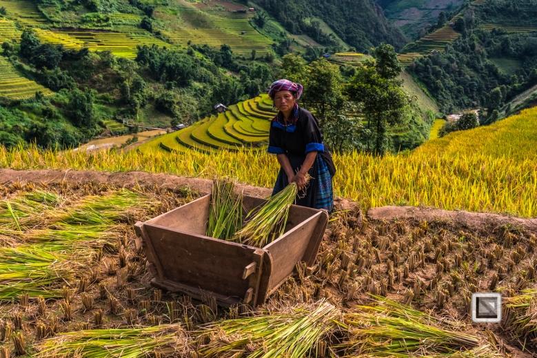vietnam-mu_cang_chai-yen_bai_province-145