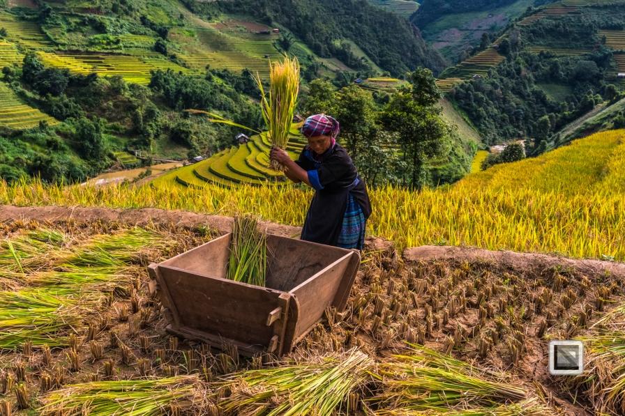 vietnam-mu_cang_chai-yen_bai_province-146