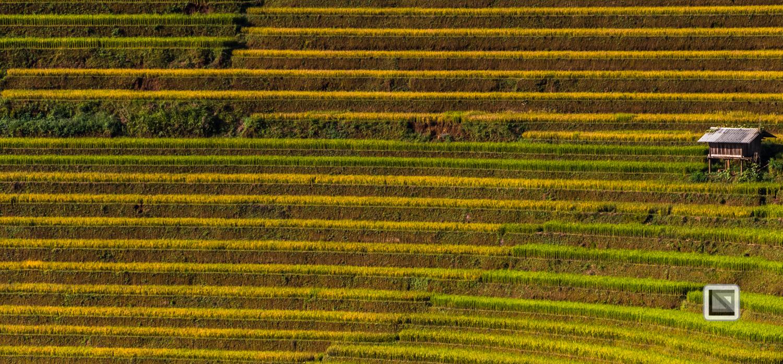 vietnam-mu_cang_chai-yen_bai_province-197