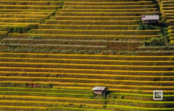 vietnam-mu_cang_chai-yen_bai_province-198