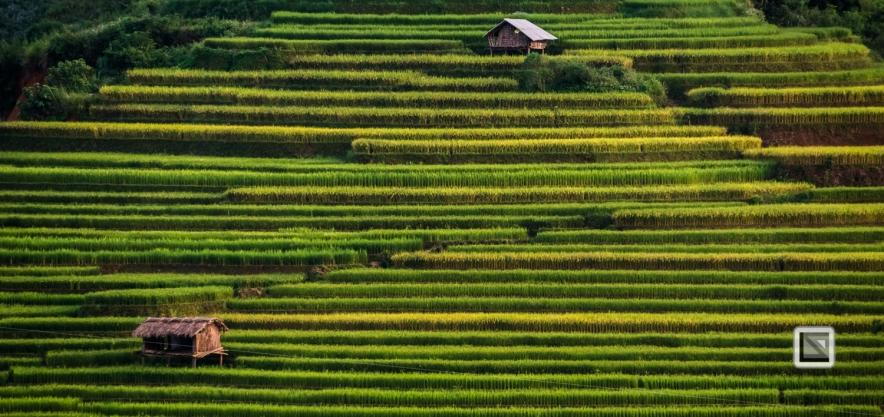 vietnam-mu_cang_chai-yen_bai_province-81