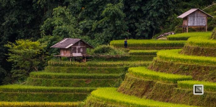 vietnam-mu_cang_chai-yen_bai_province_2-3