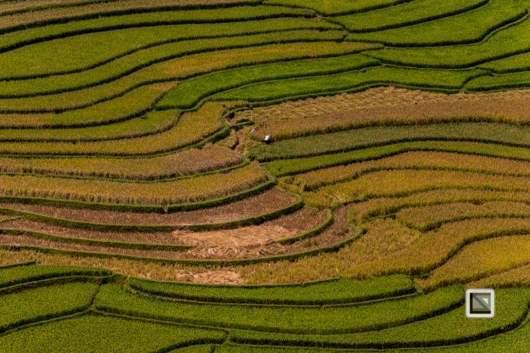 vietnam-van_chan-mu_cang_chai-yen_bai_province-100