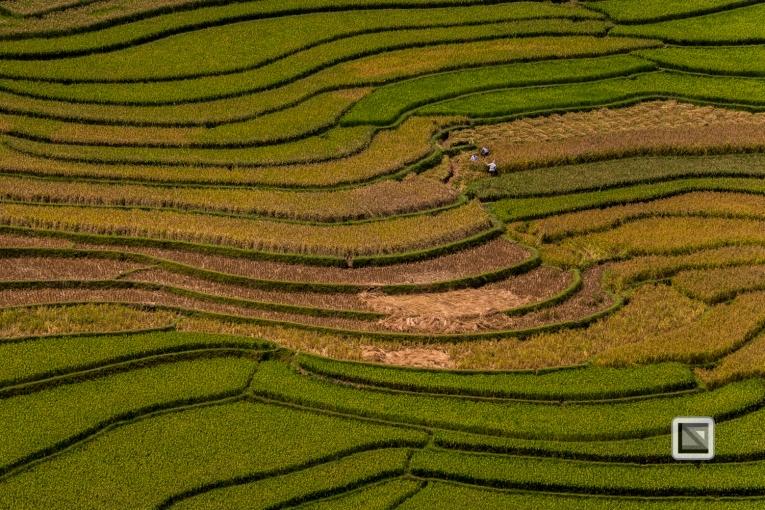 vietnam-van_chan-mu_cang_chai-yen_bai_province-102