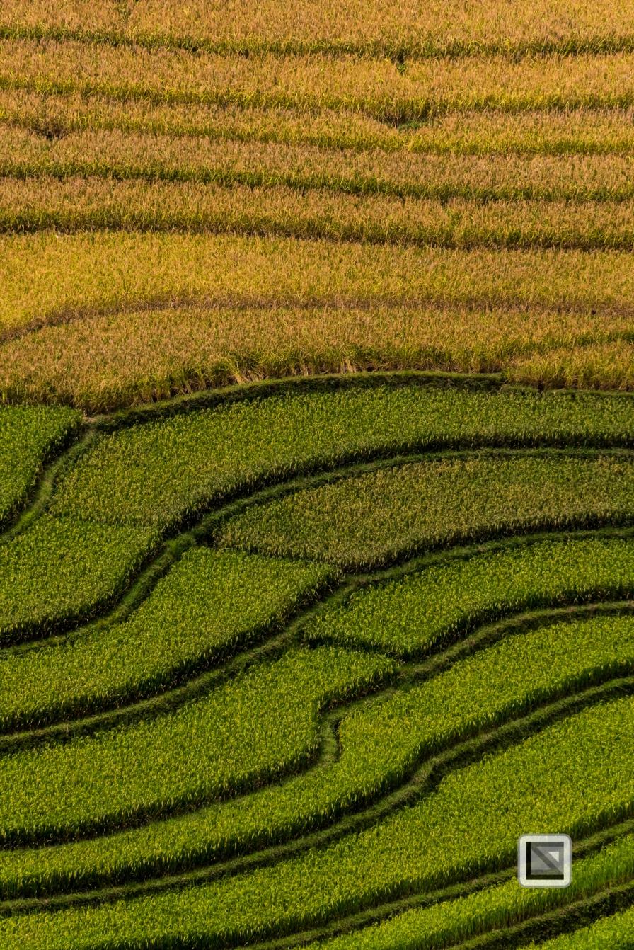 vietnam-van_chan-mu_cang_chai-yen_bai_province-109