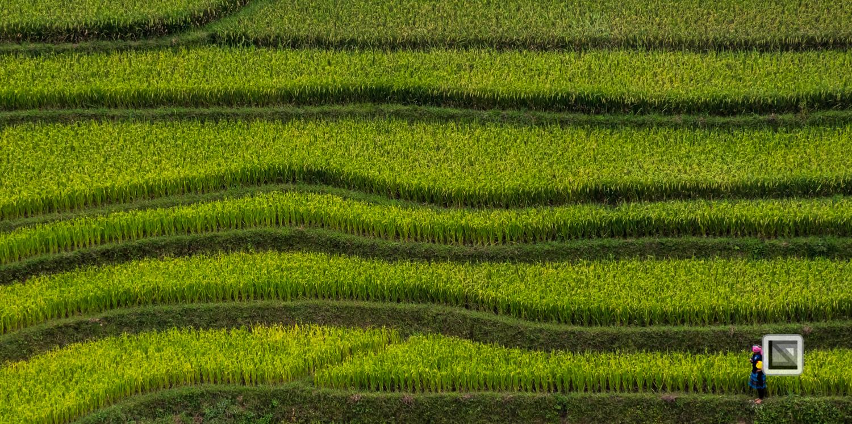 vietnam-van_chan-mu_cang_chai-yen_bai_province-111-3