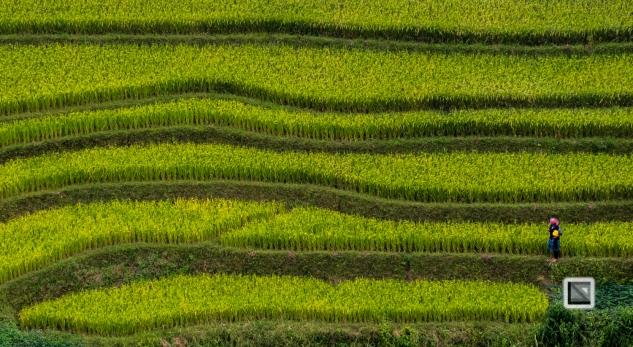 vietnam-van_chan-mu_cang_chai-yen_bai_province-111