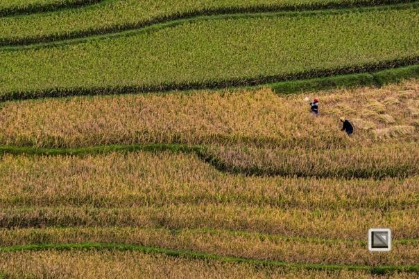 vietnam-van_chan-mu_cang_chai-yen_bai_province-112