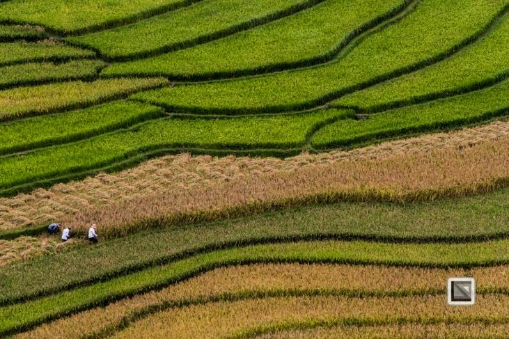 vietnam-van_chan-mu_cang_chai-yen_bai_province-115