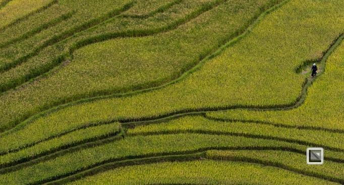 vietnam-van_chan-mu_cang_chai-yen_bai_province-120