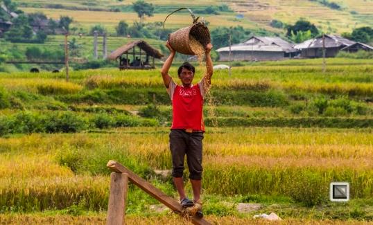vietnam-van_chan-mu_cang_chai-yen_bai_province-156