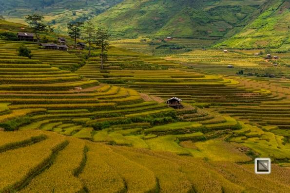 vietnam-van_chan-mu_cang_chai-yen_bai_province-161