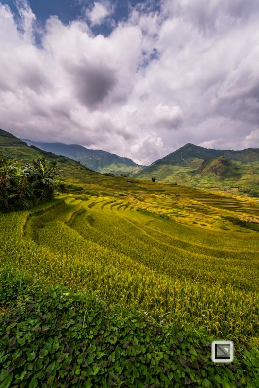 vietnam-van_chan-mu_cang_chai-yen_bai_province-173