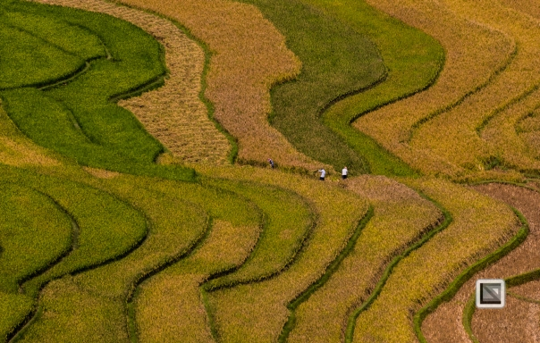 vietnam-van_chan-mu_cang_chai-yen_bai_province-98
