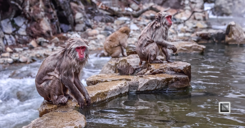 japan-jigokudani-snow_monkeys-101