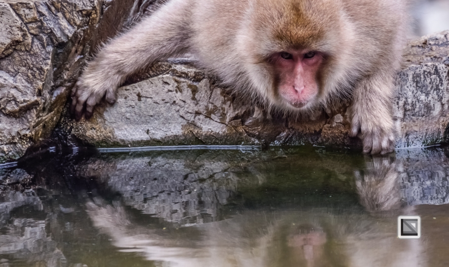 japan-jigokudani-snow_monkeys-117