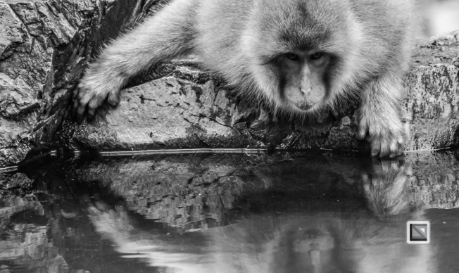 japan-jigokudani-snow_monkeys-118