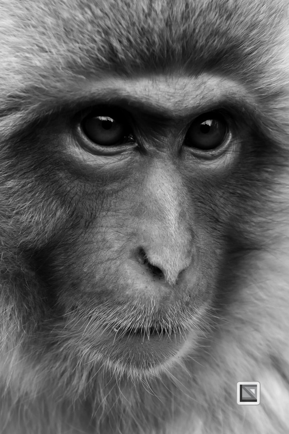 japan-jigokudani-snow_monkeys-125