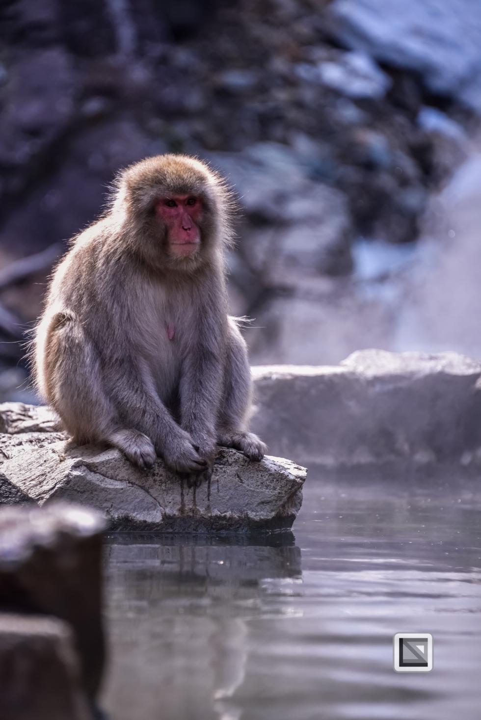 japan-jigokudani-snow_monkeys-26