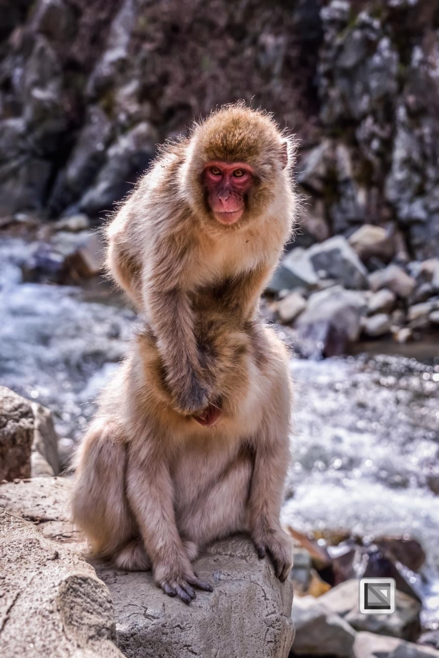 japan-jigokudani-snow_monkeys-39