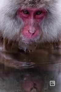 japan-jigokudani-snow_monkeys-58