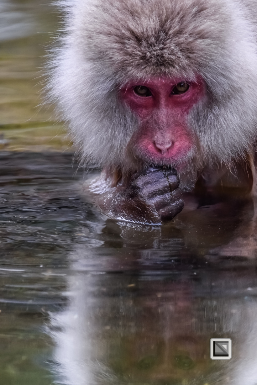 japan-jigokudani-snow_monkeys-59