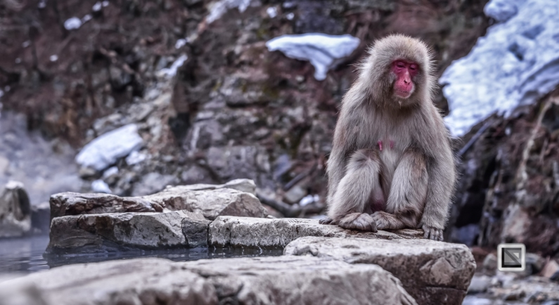 japan-jigokudani-snow_monkeys-69