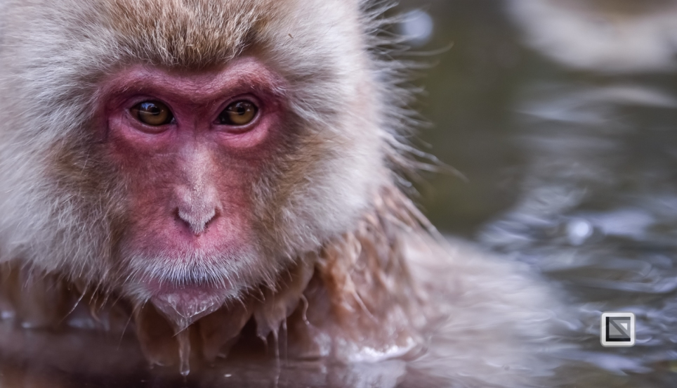 japan-jigokudani-snow_monkeys-84