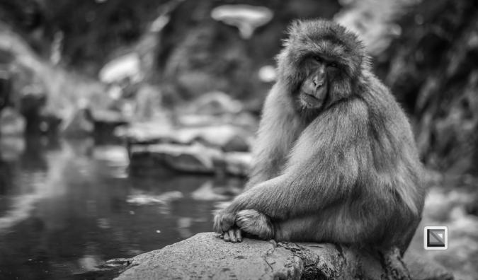 japan-jigokudani-snow_monkeys-89