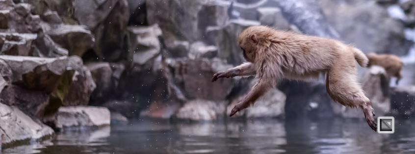 japan-jigokudani-snow_monkeys-93