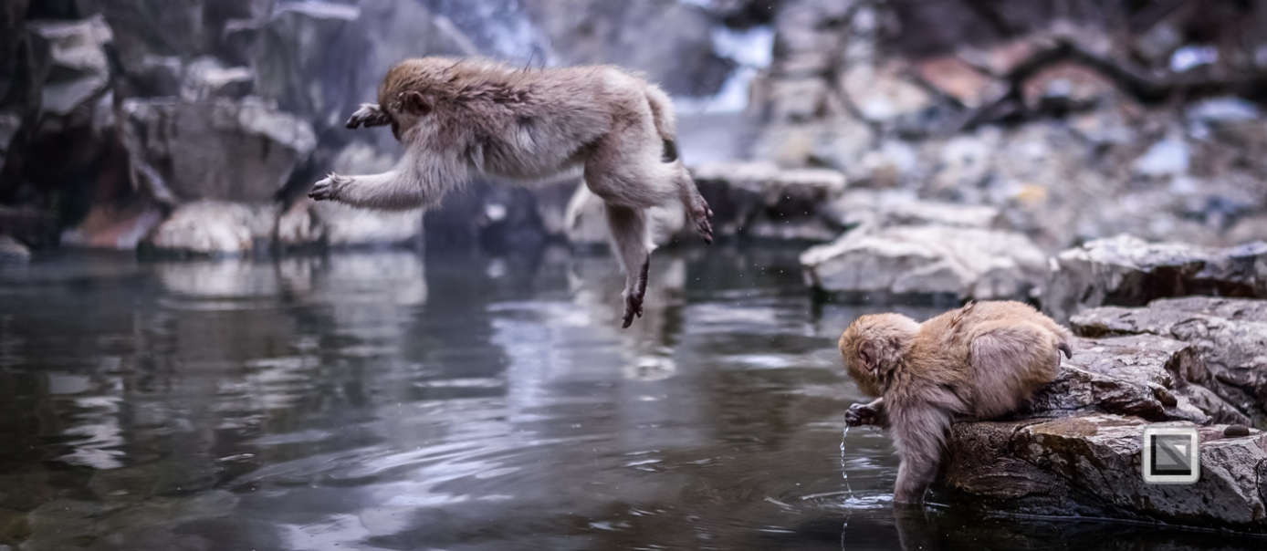 japan-jigokudani-snow_monkeys-95