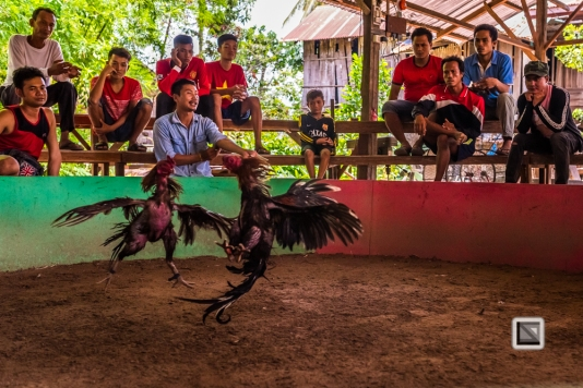 lao-4000-islands-don-dhet-chicken-fight-19