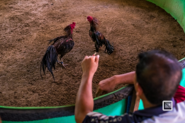 lao-4000-islands-don-dhet-chicken-fight-2