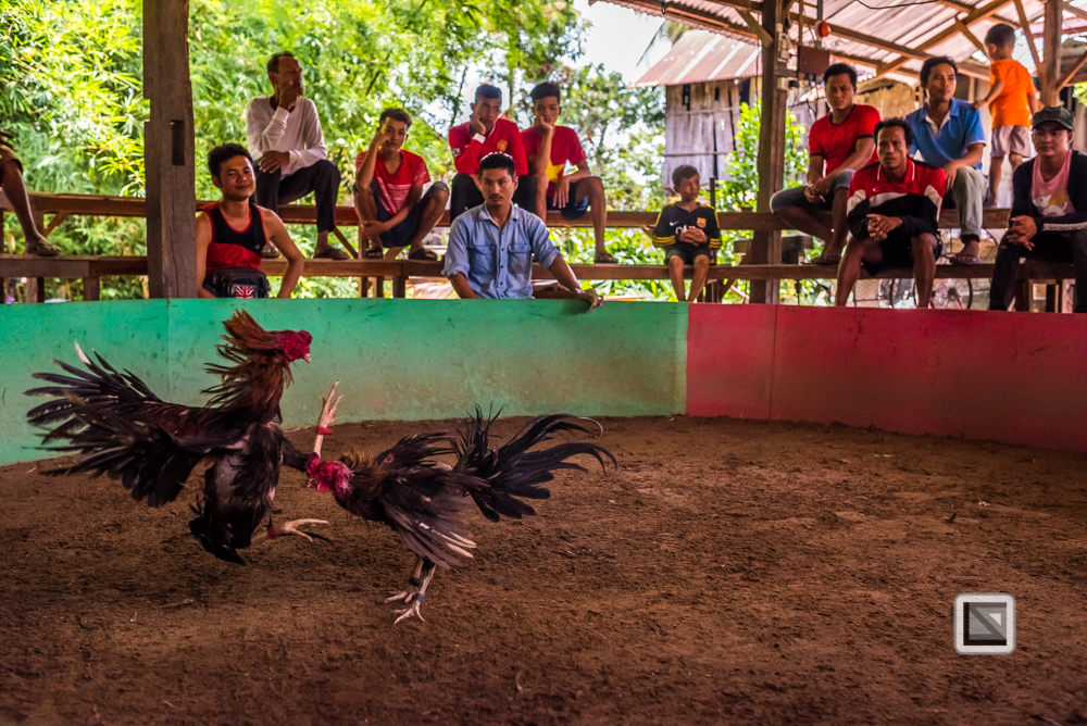 lao-4000-islands-don-dhet-chicken-fight-20