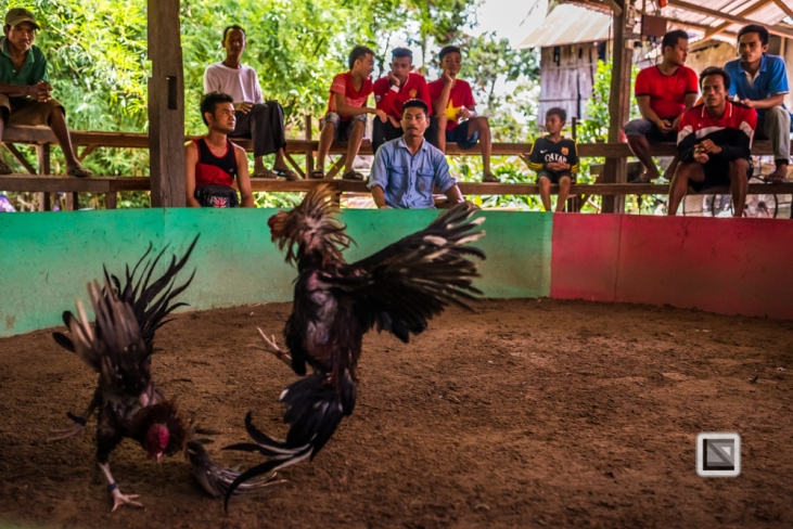 lao-4000-islands-don-dhet-chicken-fight-21