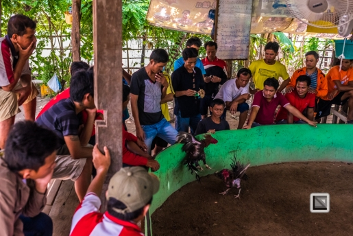 lao-4000-islands-don-dhet-chicken-fight-26