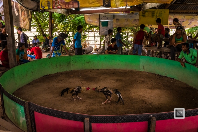 lao-4000-islands-don-dhet-chicken-fight-27