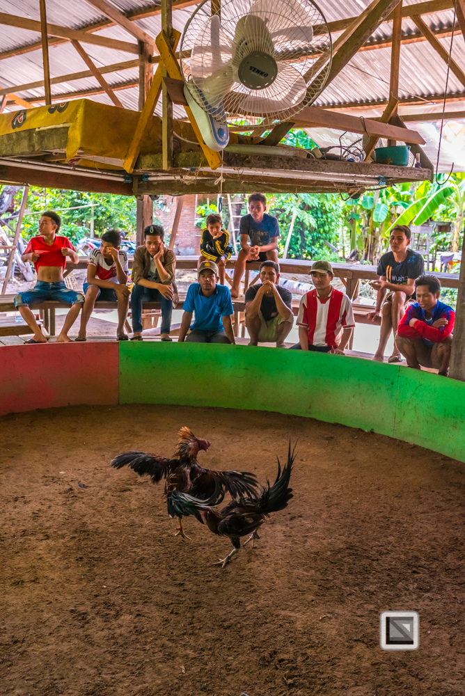 lao-4000-islands-don-dhet-chicken-fight-3