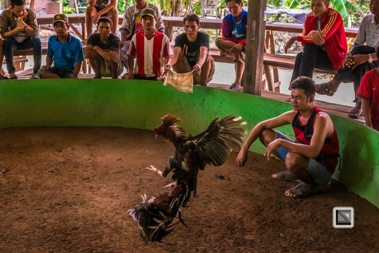 lao-4000-islands-don-dhet-chicken-fight-5