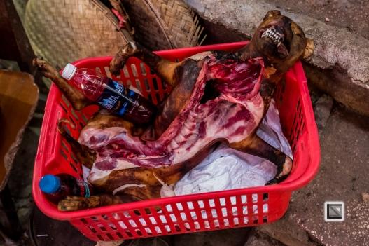 vietnam-hanoi-dog-8