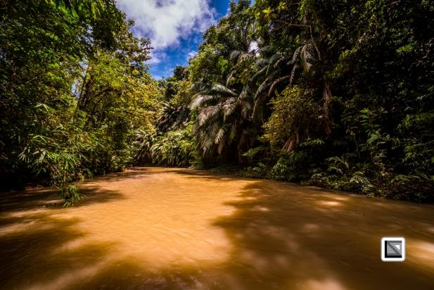 Malaysia-Sarawak-Jungle-8