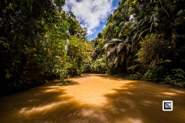 Malaysia-Sarawak-Jungle-9
