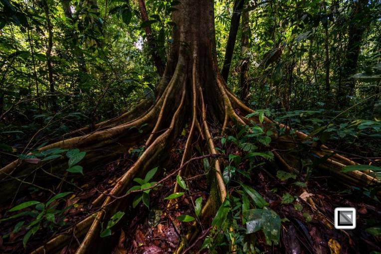 Malaysia-Sarawak-Mulu_Nationalpark2-39