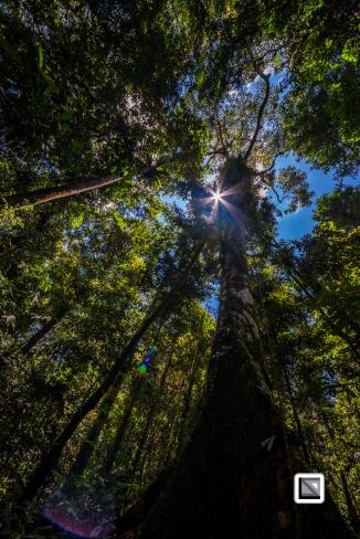 Malaysia-Sarawak-Mulu_Nationalpark2-44