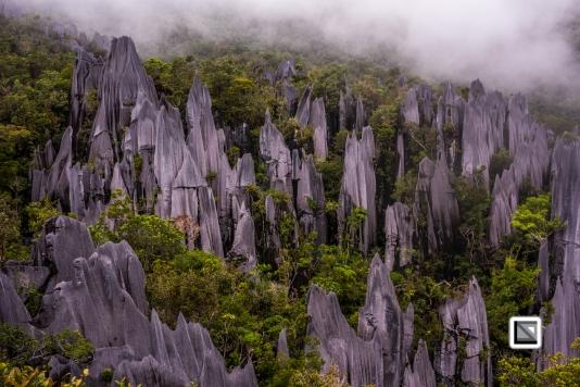 Malaysia-Sarawak-Mulu_Pinnacles-40