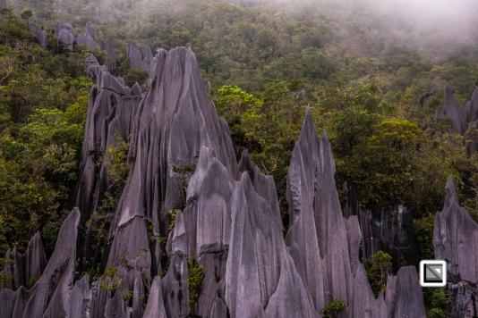 Malaysia-Sarawak-Mulu_Pinnacles-43