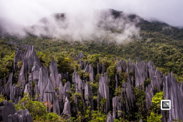 Malaysia-Sarawak-Mulu_Pinnacles-45