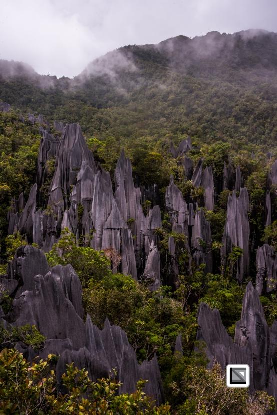 Malaysia-Sarawak-Mulu_Pinnacles-48