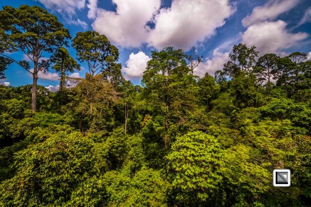 Malaysia-Borneo-Sabah-Sepilog-40