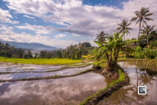 Indonesia-Sumatra-102